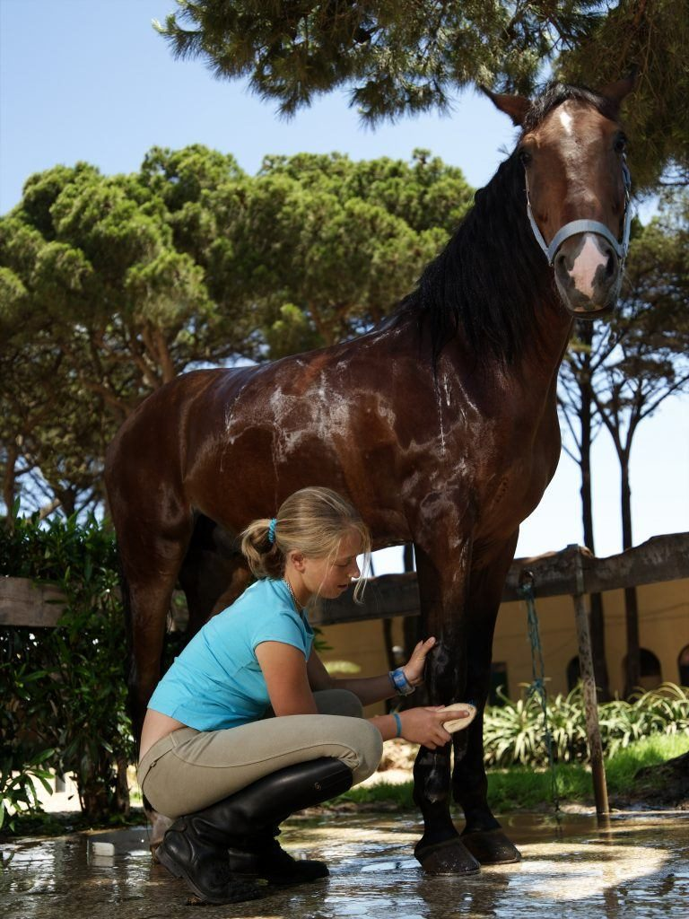 3fb6098563a79 Outdoor riding arena (jumping and dressage) Indoor riding arena. Show  ground. Boxes Saddler Farrier Paddocks Equipment shop. Bar   Restaurant